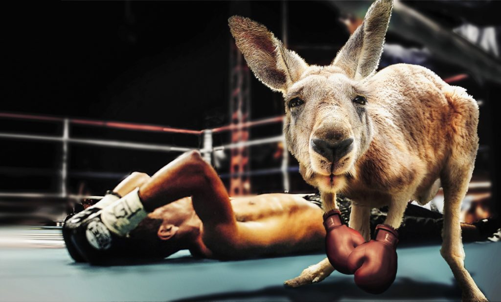 Kangaroo boxing champion : website development agency is better than online saas web builder